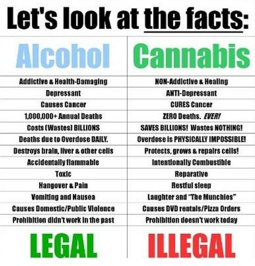 Alcohol v. Cannabis Image